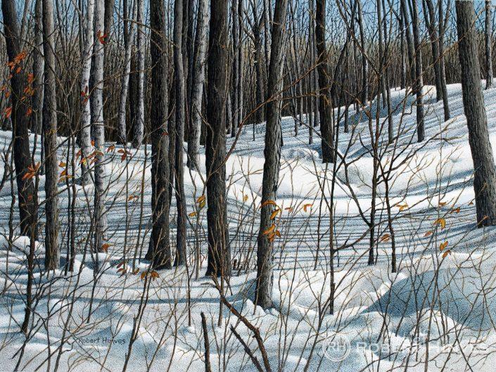 Robert Hinves - Durham Forest