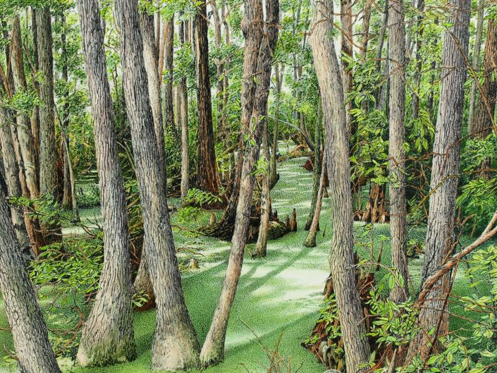 Robert Hinves - Florida Wetlands